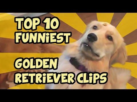 TOP 10 OF THE FUNNIEST GOLDEN RETRIEVER VIDEOS OF ALL TIME