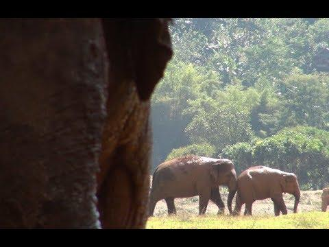 Elephant finally found a friend after being rescued for 4 years