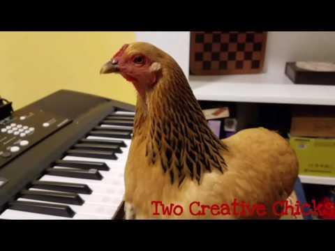 My Chicken Plays Piano Better Than You!