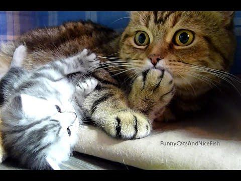 Top Playful Funny Cats And Kittens | New HD Compilation