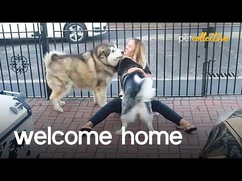 Welcome Home Pets Video