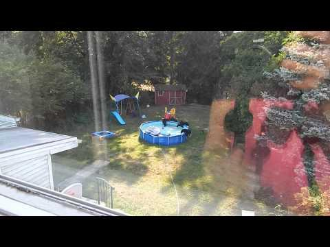5 Cubs And Mama Bear Take Over Family Pool!
