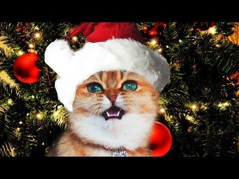 Funny Christmas Cats Sing Deck the Halls Video | Fa La La - Jingle Cats - Merry Christmas