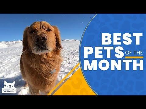 Best Pets of The Month | February 2019