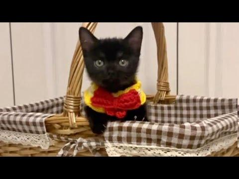 Tiny Troublesome Black Kitty Video
