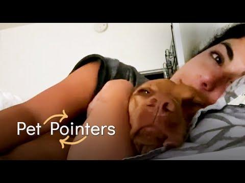 Dealing With An Anxious Dog | Pet Pointers #Video