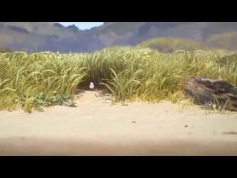 Piper Pixar Short Video