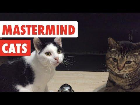 Mastermind Cats | Funny Cat Video Compilation 2017