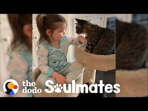 4-Year-Old Girl Has The Purest Friendship With Her Rescue Cats