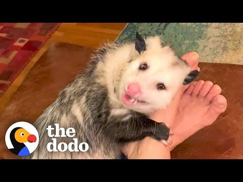 Opossum Covers His Mom's Face In Kisses #Video
