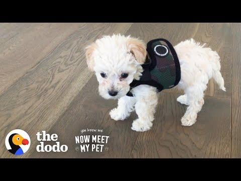 iJustine and Jenna Ezarik's Puppy Grows Up To Be A Wild Child Video