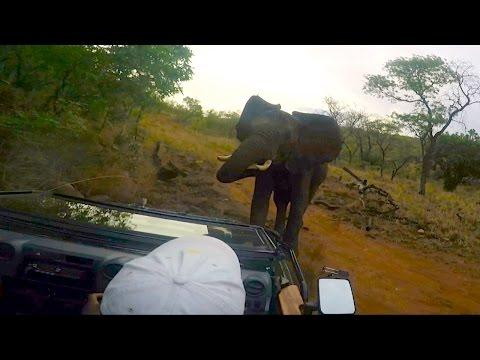 Film Crew Attacked By Elephant After High Speed Chase