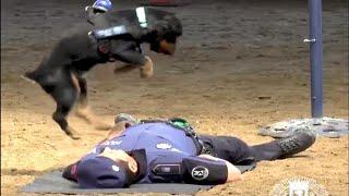 Police Dog Jumps Up and Down on Agent's Chest in Mock CPR Demonstration