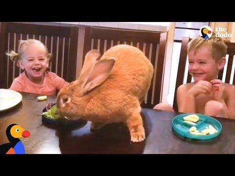 Giant Bunny Has The Best Family - COCOA PUFF