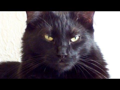 9 Signs Cats Are Plotting World Domination!