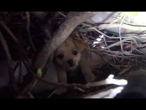 Hope For Paws Saving Five Orphaned Puppies.