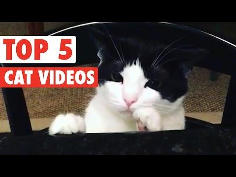 Top 5 Funny Cats Compilation    Feb 26 2016