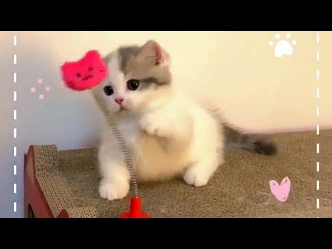 Playful Baby Kitties Video