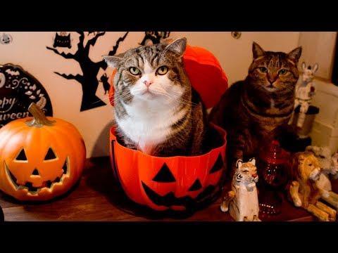 ハロウィンなねこ。-Maru&Hana's Halloween.-