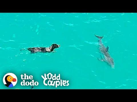 Dog And Wild Dolphin Play Whenever They See Each Other. Video.