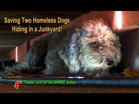 Saving Two Homeless Dogs Hiding In A Junkyard!