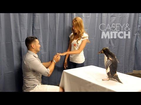 Surprise Proposal At The Zoo - Casey And Mitch