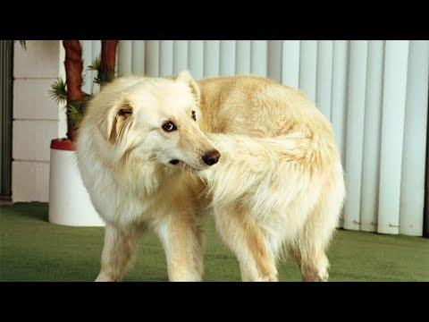 Dogs and Cats Chasing Their Tails Funny Animal Videos