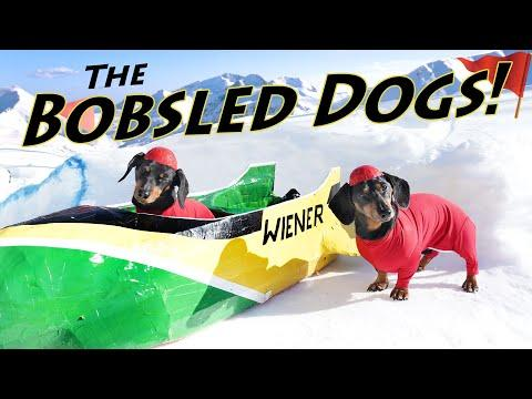 Ep 7. Wiener Dog BOBSLED - Funny Dogs in a Bobsled!