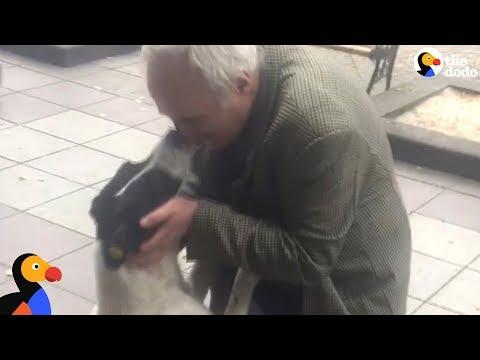 Man Films Himself Reuniting With Dog After 3 Years Apart