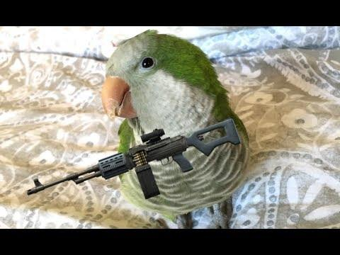 The Most Dangerous Bird - Your Daily Dose Of Internet