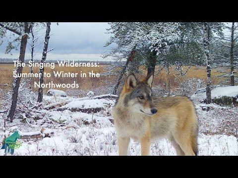The Singing Wilderness: summer to fall in the Northwoods #Video