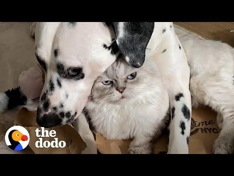 Dog Uses A Cat As A Pillow?! #Video