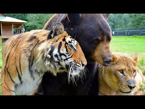 Animal Friends – Unbelievable Animal Friendships Video – Amazing Animal Friendship Videos