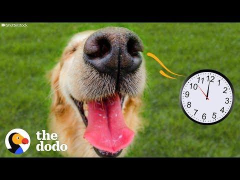 Dogs Can Actually SMELL Time | The Dodo