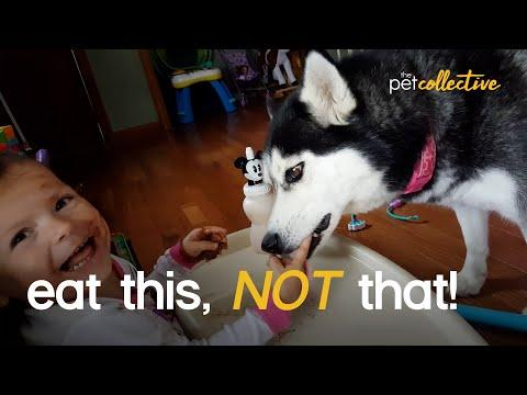 Eat This...Not That: Dog Edition