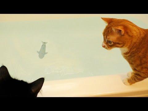 Cats Vs Rare Bathtub SHARK!