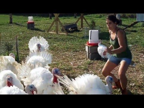 Funny Turkeys Compilation