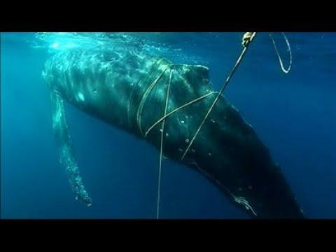 Man Saves Whale From Drowning - Your Daily Dose Of Internet