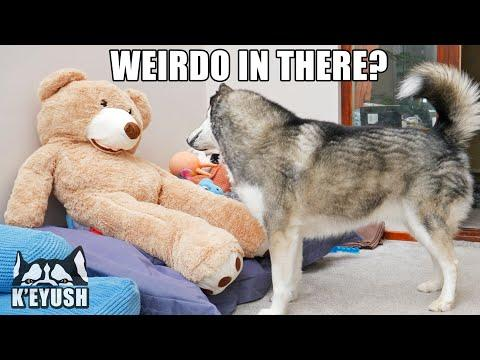 Hiding From My Dog Video! Playing My Voice Inside A Bear!