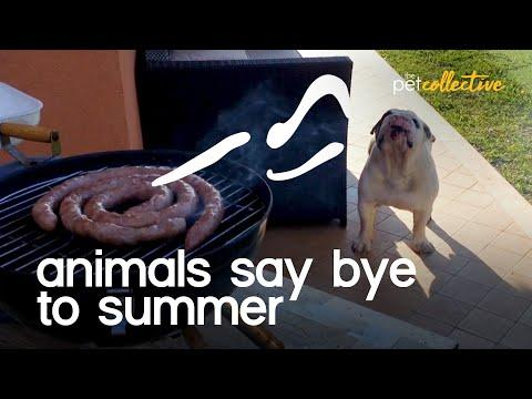 Animals Say Goodbye To The Summer Video