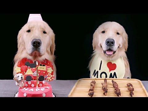 Birthday Retriever Gets Special Treat Video