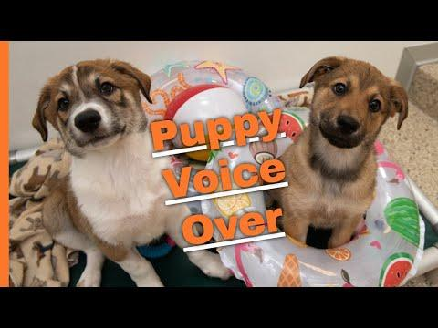 Puppy voice over! Pupperinos have a lot to say