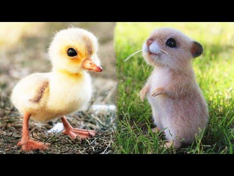 Cute baby animals Videos Compilation July 2020