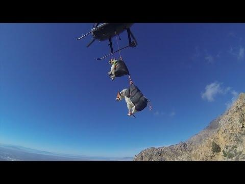 The Best Way To Move Mountain Goats - Helicopters.