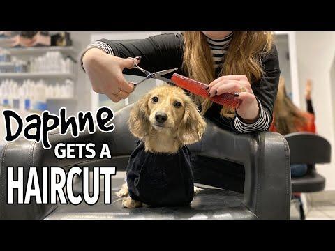 Ep#16: Daphne Gets a Haircut! (Finale) - Cute Dachshund Video!