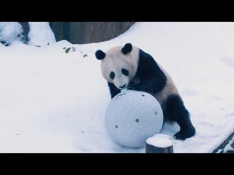 Panda Snow Day