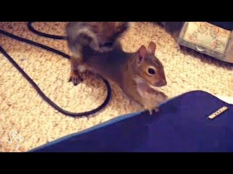 Lele The Rescued Squirrel
