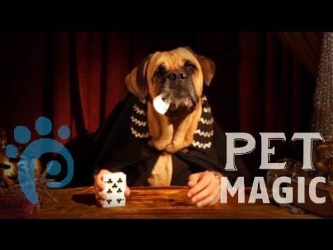 The Great Dogzini- Pet Magic | Petcentric