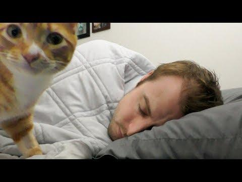 Why Do Cats Like To Sleep With Us?