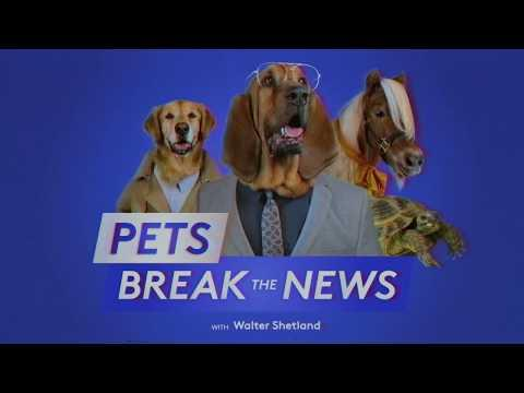 Pets Break The News – Holiday Smells